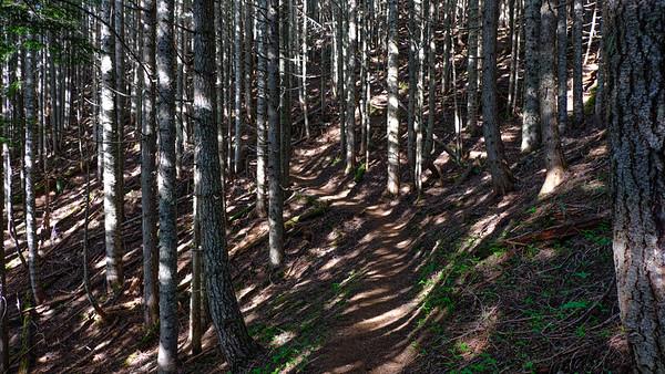 Dappled light through the woods