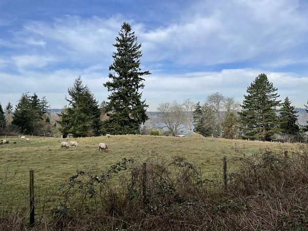 Many sheep farms line the island