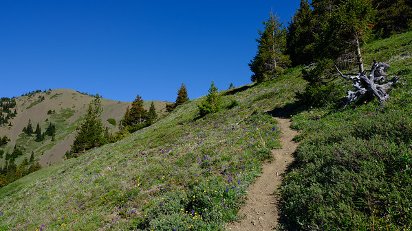 Trail leading to the ridge