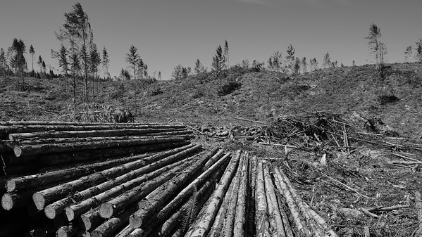 Recent logging efforts