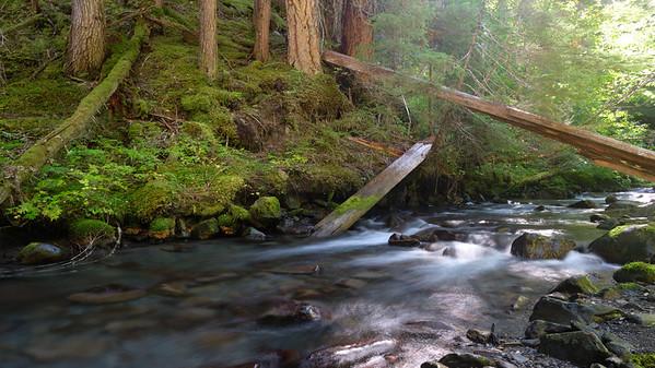 Dappled light along Royal Creek