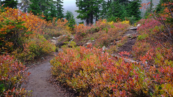 Colors as you arrive at Rachel Lake