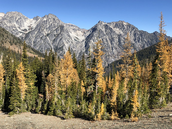 Golden trees at the Pass
