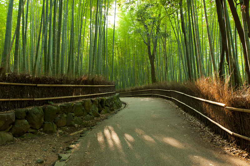 Arashiyama EARLY IN THE MORNING