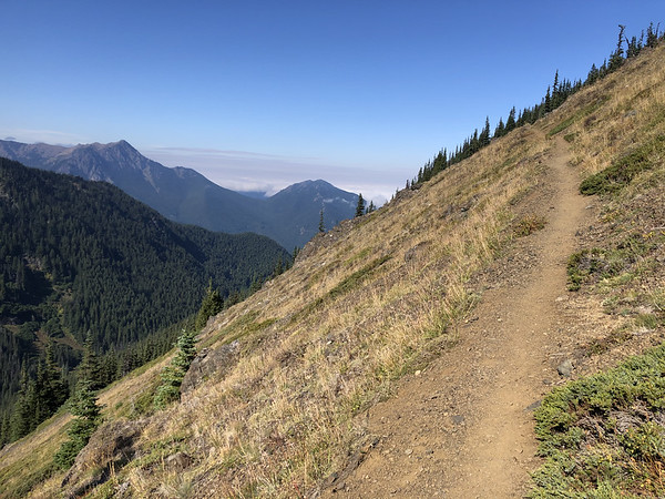 Trail leading back to Little Quilcene Trail