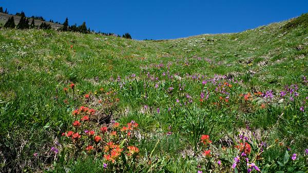 Beautiful meadow of wildflowers; probably peaking a few weeks