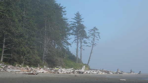 Fog rolling in around the point