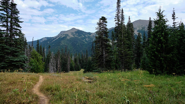 One of the many large meadows in Badger Valley