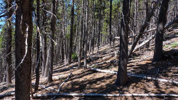 Descending the Maynard Burn trail