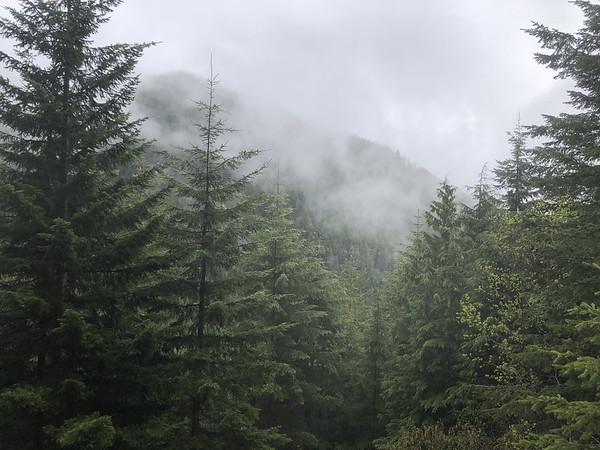 Fog settling in the trees