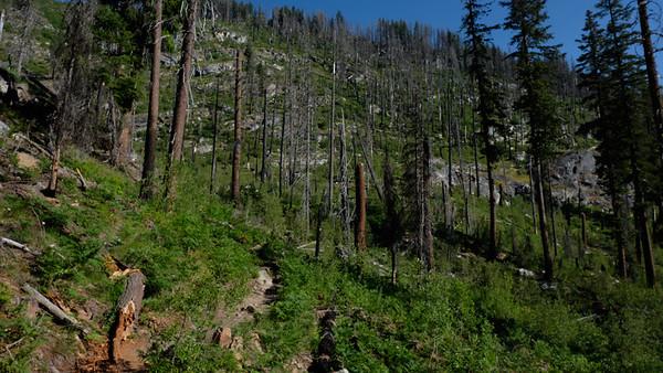 Trail through the burn area