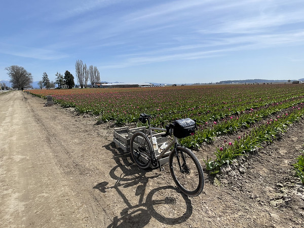 Bike with the rows of flowers
