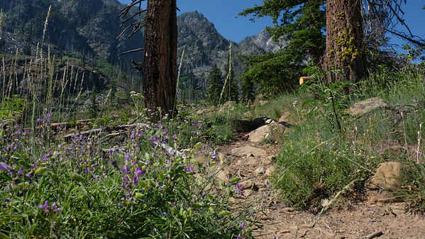 Trail with lupine