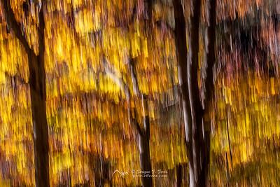 Autumn impresions 3, P. Nt. Sierra Cebollera, La Rioja