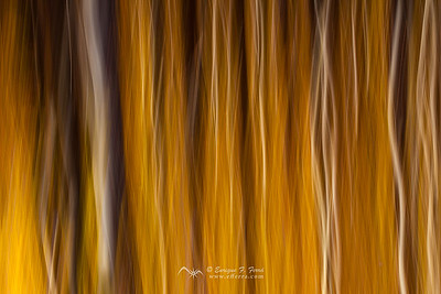 Autumn impresions 4, P. Nt. Sierra Cebollera, La Rioja