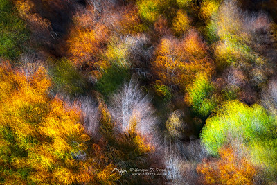 Blurry Autumn