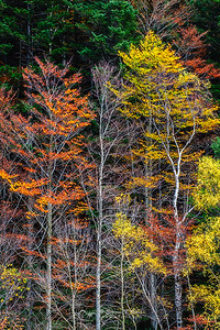 Autumn palette, Valle de Pineta, Huesca