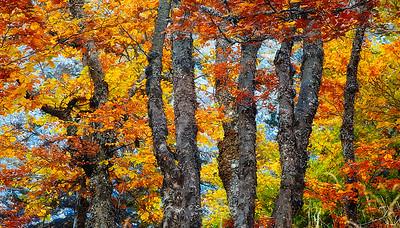 Colores de otoño en la Pedrosa