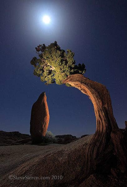 A nocturnal alignment of earth and space in Joshua Tree National Park.