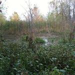 Creve Couer Marsh