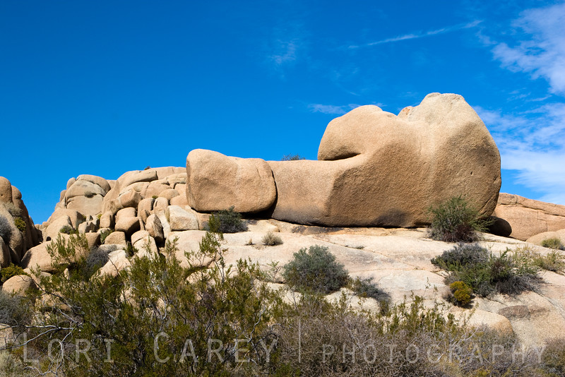 This monzogranite rock formation reminded me of Yogi Bear sleeping on his side with his back turned to me. Jumbo Rocks campground, Joshua Tree National Park, California USA