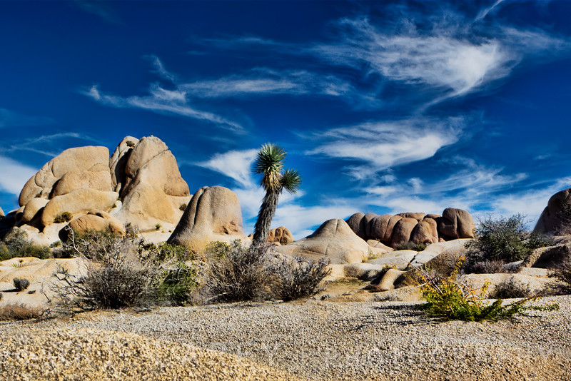 The Slull Rock nature trail wanders through a surreal landscape of weathered and eroded monzogranite rock formations and desert washes. Joshua Tree National Park, California, USA