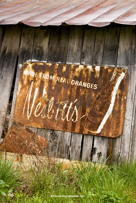 Rusty Old Nesbitt's Orange Soda Sign, Pike County, Ohio
