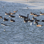 Teal Pond