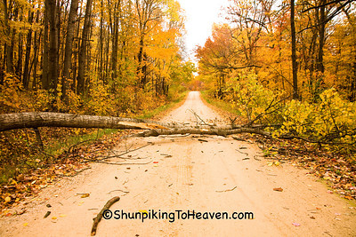 The Tree That Fell on Our Car, Sauk County, Wisconsin