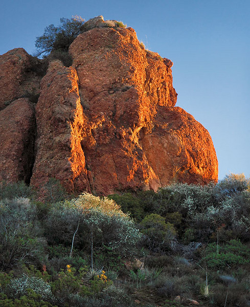 Early bloomers under sandstone in the highest part of the mountain range.