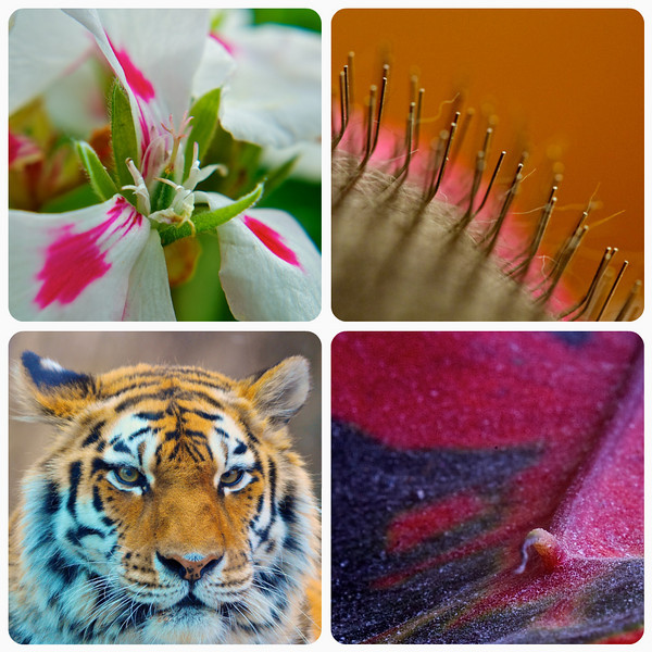 The many ways to get close up photos: 10x Close Up Filter, Macro Lens, Reverse Lens Macro, Telephoto Lens.