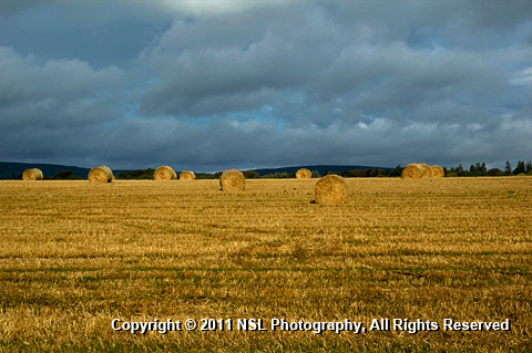 Farm Field by NSL Photography