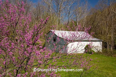White Barn and Redbud Tree, Morgan County, Ohio
