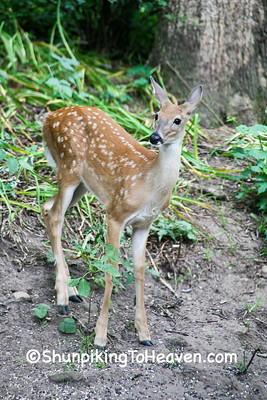 Fawn, Dane County, Wisconsin