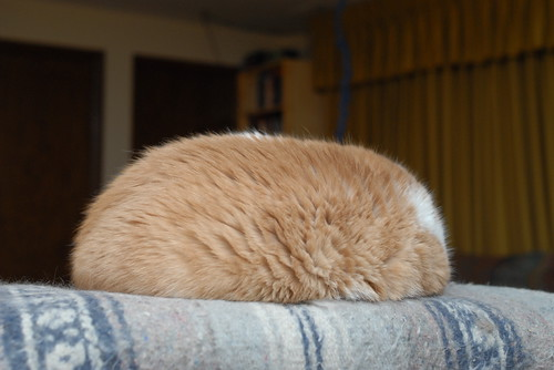 Cat or Tribble?