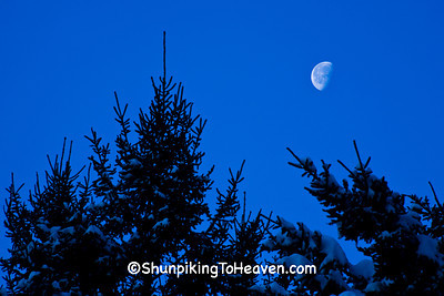Pine Trees and Half Moon, Sauk County, Wisconsin