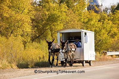 Donkey Train: Bernice, Olga, and Bob, Richland County, Wisconsin