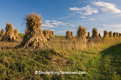 Amish Corn Shocks, Sauk County, Wisconsin