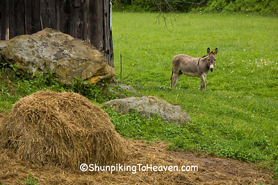Donkey by Barn, Carter County, Kentucky