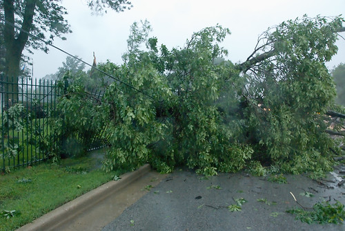 Bigger Tree Down on Road