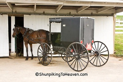 Amish Horse and Buggy, Holmes County, Ohio
