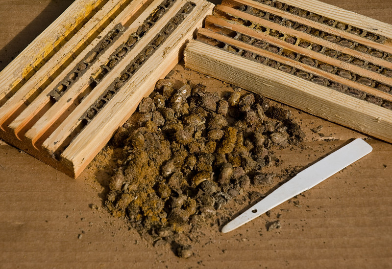 Mason Bee cocoon trays