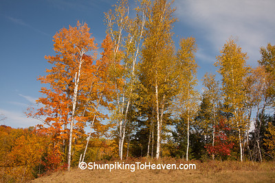 Autumn Trees, Langlade County, Wisconsin