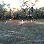 Lorrie's deer feeder - Lamar Peninsula
