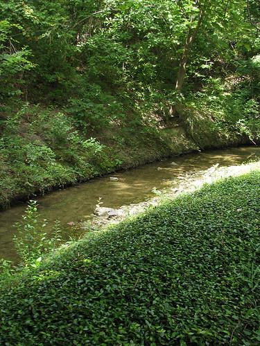 A creek running through lush vegetation (20080713_09755)