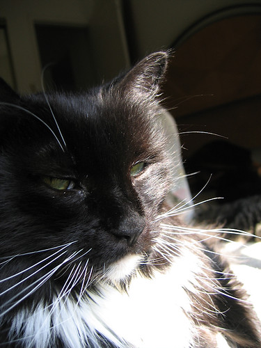 A close-up of Loki with sunlight falling across part of his face (190_9088)