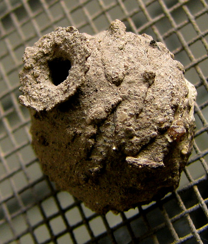 The nest of a common potter wasp (a.k.a. dirt dauber; Eumenes fraternus) (20080510_05136)