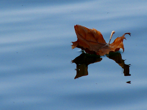 A lone leaf adrift on still waters (20080921_12657)