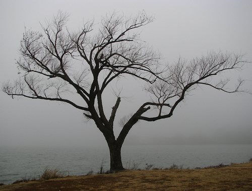 A naked tree on the shore of White Rock Lake on a foggy morning (20080126_01604)
