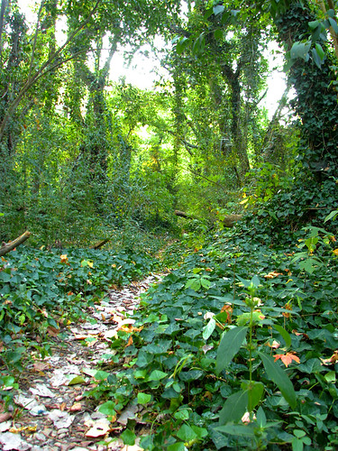 A trail leading through dense woodlands (20081004_13074)